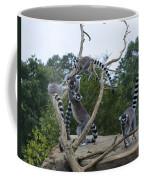 Ring Tailed Lemurs Playing Coffee Mug