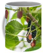 Ripe Mulberry On The Branches Coffee Mug