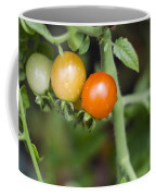 Ripening Coffee Mug