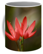 River Lily Coffee Mug