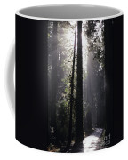Road Through Redwoods Coffee Mug