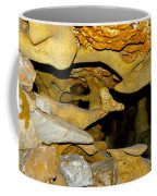Roadrunner And The Rabbit - Georgetown Texas  Coffee Mug