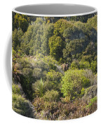 Roadside Forest Scenery Coffee Mug