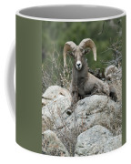 Rocky Mountain Big Horn Coffee Mug