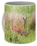 Roe Deer Capreolus Capreolus With Two Fawns Coffee Mug
