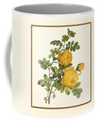 Rosa Sulfurea -yellow Rose  Square Coffee Mug