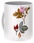 Rosa Villosa Coffee Mug