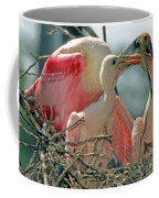 Roseate Spoonbill Feeding Young At Nest Coffee Mug