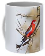 Crimson Rosella 1 - Australia Coffee Mug