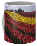 Rows Of Multicolored Tulips In Field Mount Vernon Washington Sta Coffee Mug