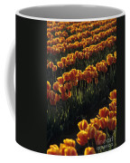Rows Of Orange Tulips In Field Mount Vernon Washington State Usa Coffee Mug