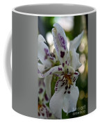 Royal Orchid  Coffee Mug