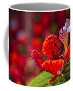 Royal Poinciana - Flamboyant - Delonix Regia Coffee Mug