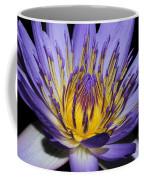 Royal Purple Water Lily #5 Coffee Mug