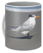 Royal Tern Seafoam Coffee Mug
