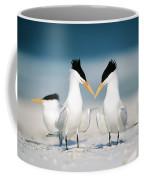 Royal Terns Coffee Mug