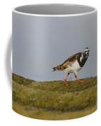 Ruddy Turnstone Arenaria Interpres Coffee Mug