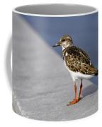 Ruddy Turnstone Bird Arenaria Interpres Florida Usa Coffee Mug