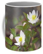Rue Anemone Wildflower - Pale Pink - Thalictrum Thalictroides Coffee Mug