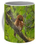 Rufous Morph Costa Rican Pygmy-owl Coffee Mug by Tony Beck