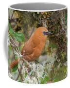 Rufous Wren Coffee Mug