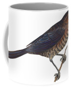 Rusty Blackbird  Coffee Mug