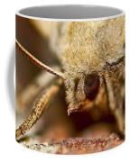 Sad Eyed Sphinx Coffee Mug