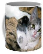 Safe Coffee Mug by Susan Leggett