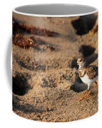 Sanderling 005 Coffee Mug