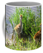 Sandhill Crane Chicks  Coffee Mug