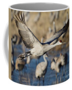 Sandhill Crane Lift Off Coffee Mug