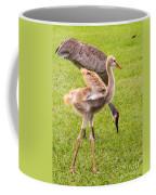 Sandhill Cranes Walking Around Coffee Mug