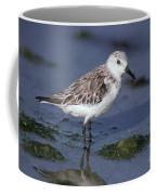 Sandpiper Calidris Mauri Coffee Mug