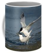 Sandwich Terns Mating Coffee Mug