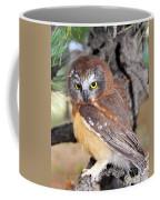 Saw-whet Owl In Conifers Coffee Mug