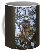 Saw Whet Owl Coffee Mug