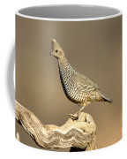 Scaled Quail Callipepla Squamata Coffee Mug