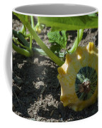 Scallop Squash Coffee Mug