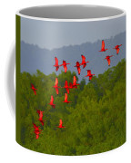 Scarlet Ibis Coffee Mug by Tony Beck