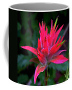 Scarlet Paintbrush On Swiftcurrent Pass Trail In Glacier National Park-montana Coffee Mug