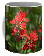 Scarlet Paintbrush. Texas Wildflowers. Castilleja_indivisa Coffee Mug