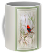 Scarlet Tanager 3630-10-ttp Coffee Mug