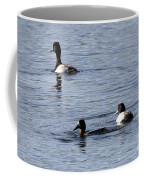 Scaup Ducks In The Spring Coffee Mug