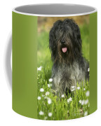 Schapendoes, Or Dutch Sheepdog Coffee Mug