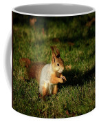 Sciurus Vulgaris In Evening Light Coffee Mug