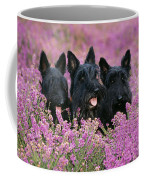 Scottish Terrier Dogs Coffee Mug