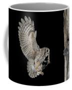 Screech Owl Feeding Owlets Coffee Mug