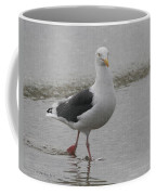 Sea Gull On The Beach At Oceanside California Coffee Mug