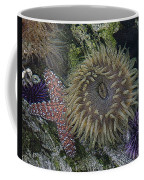 Sea Life Coffee Mug
