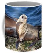 Sea Lion Pup Coffee Mug